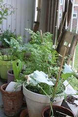 Broccoli, wortel 19-09
