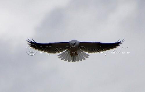 Kite Scoping