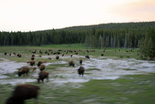 Yellowstone_0019 by AbiznessDigital