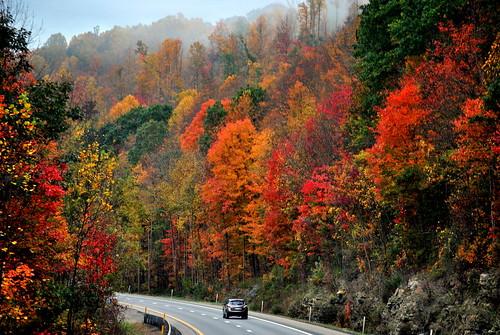 Drive into Autumn [Explore]