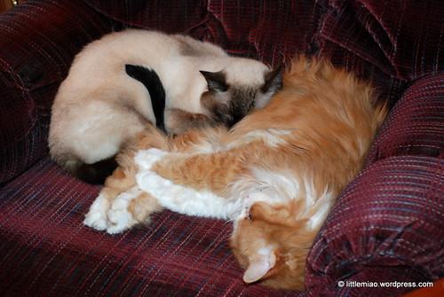Ping & Tashi snuggle