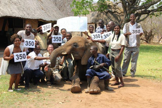350 photo with elephant