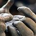 Chimpanzee_hands