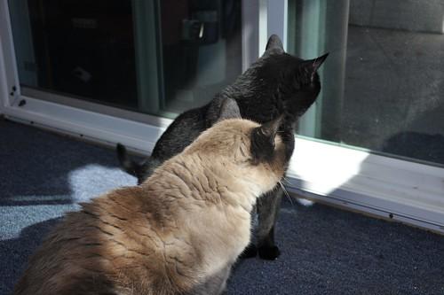 Cats soaking up the sun