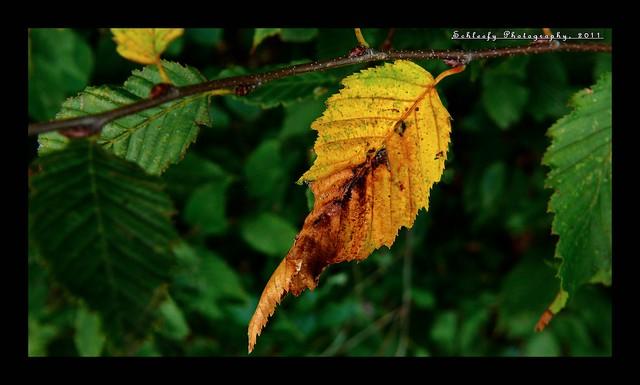 #283/365 Fall: Yellow...