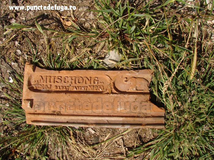 tigle muschong- fabrica margina