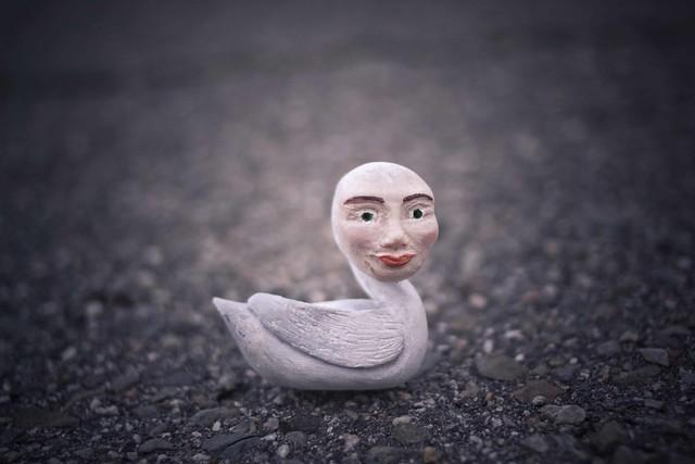 lady headed swan