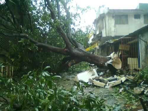 Typhoon Pedring