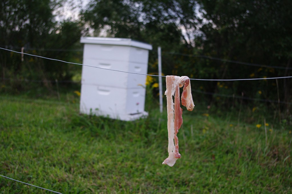 Bacon flavored electric fence