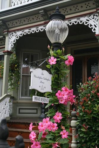 Mandevilla on lamp post of Victorian home