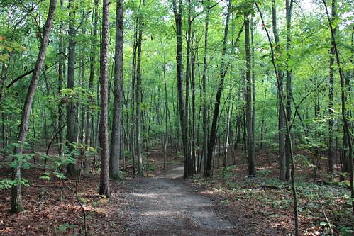 Crowders Trail by aimeesblog