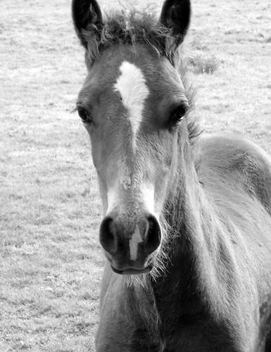 Foal 02