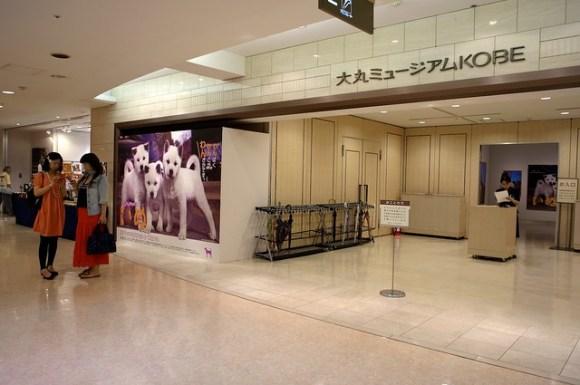 110902_iwago-dog
