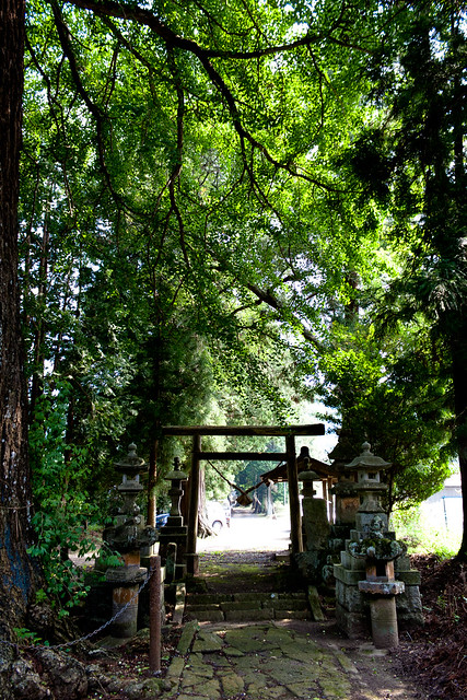 The Giant Trees of Tochigi: #82 The Giant Ginkgo of Togakushi Shrine