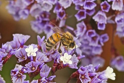 Bee in Santa Monica