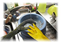 dishpan hands
