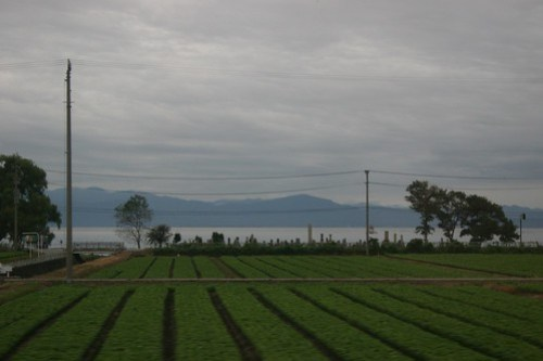 Biwako and rice fields at 6:30 am