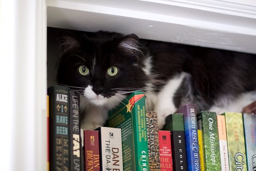top of my bookshelf is apparently the place to be