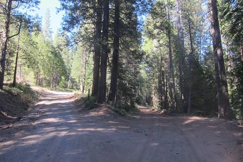 Sierra Mountain Fire Road near Pinecrest CA