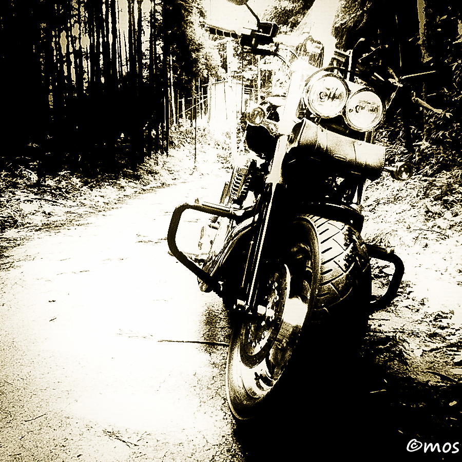 My Harley in the forest
