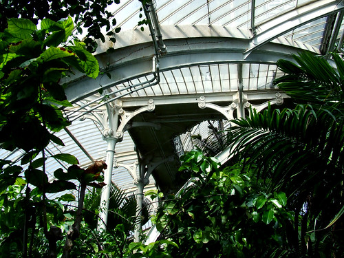 Palm House ceiling 2