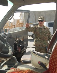 Military Working Dogs  search vehicles at 401s...