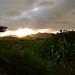 Sierra de Cabo de Gata
