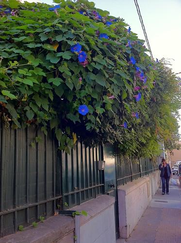 Lush vine-fence