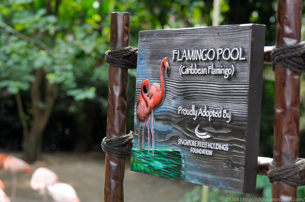 Jurong Birdpark (30 of 89)