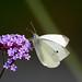 Fjärilseffekten - Butterfly effect