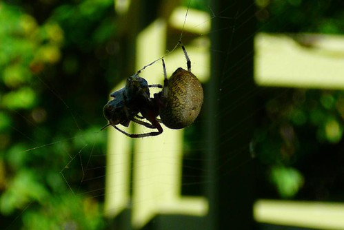 spider and supper
