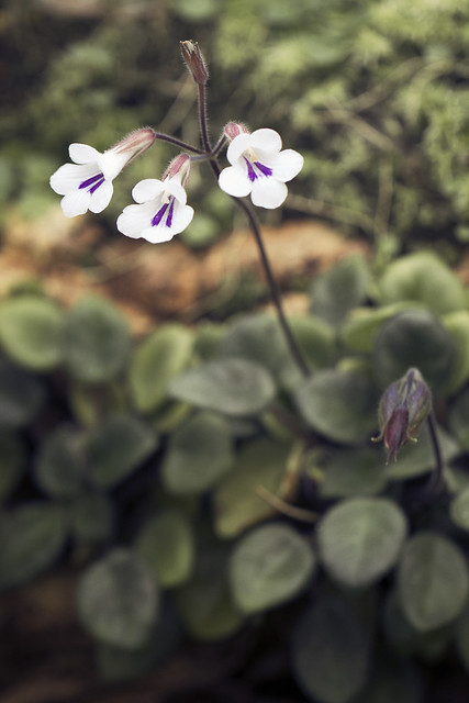 Visit to Botonical Garden 02