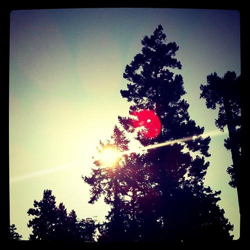 Pender Island - sun through trees