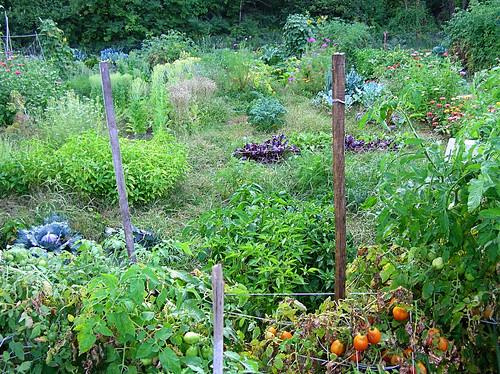 peek into the garden