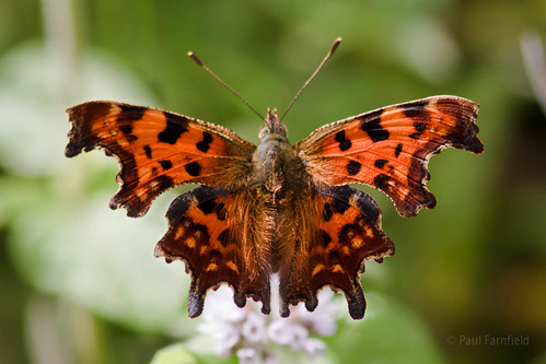 Comma by ShaftInAction