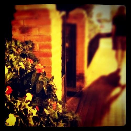 Flores, silencio y paseo nocturno by rutroncal