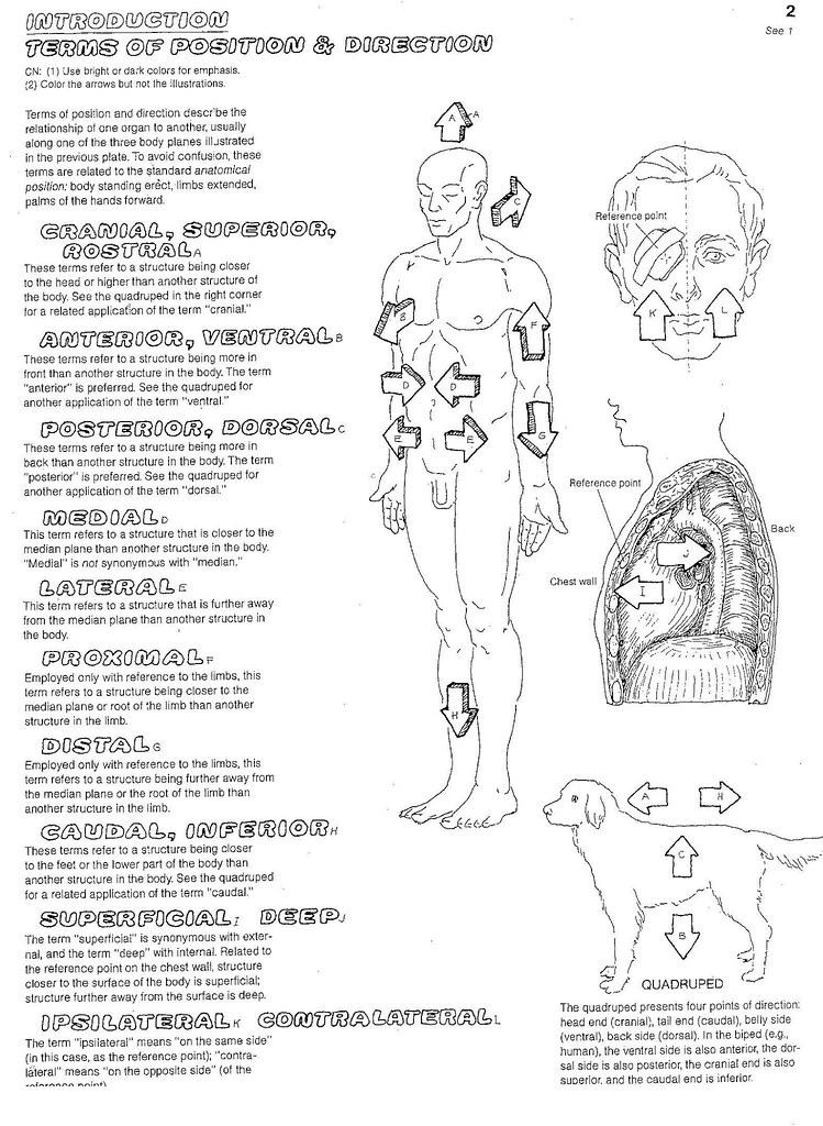 Printables. Anatomical Directions Worksheet. Mywcct