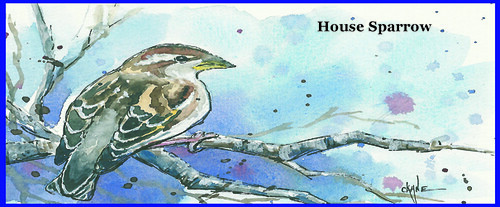 house_sparrow