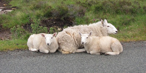 9_Sheep Friends