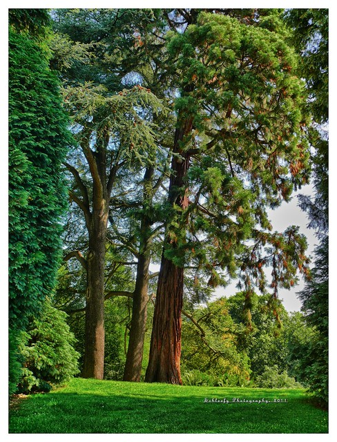 #239/365 Tree