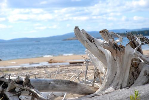 driftwood at neys provincial park