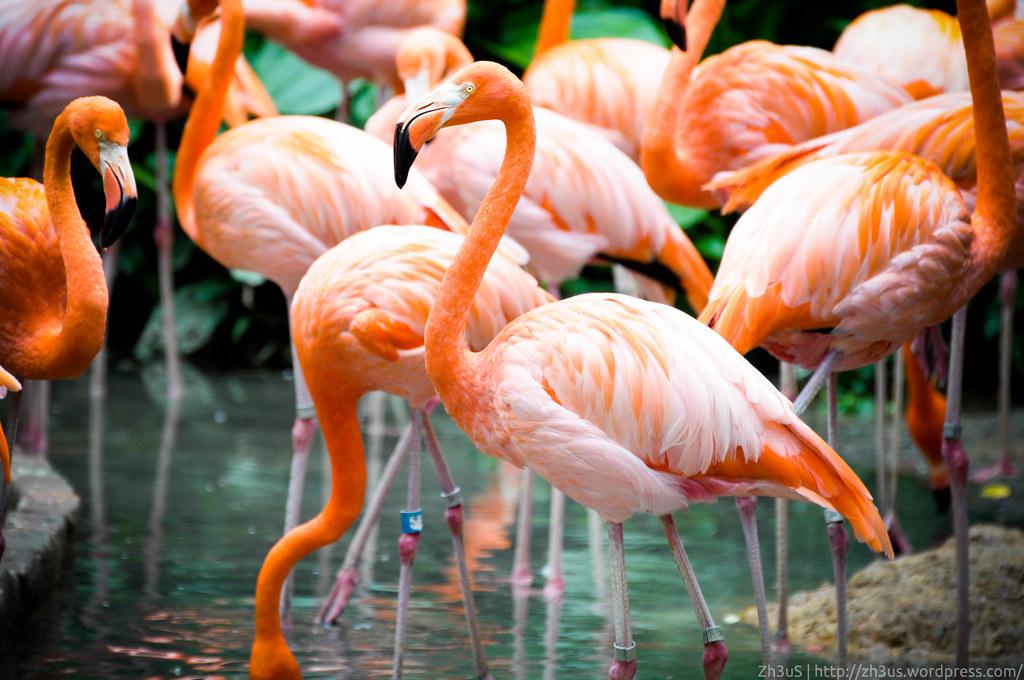 Jurong Birdpark (31 of 89)