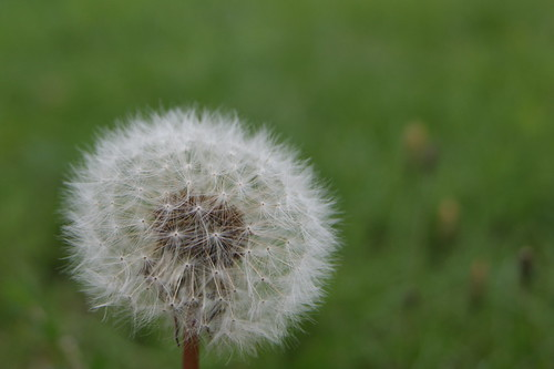 That cliched Macro Shot on a dandelion head. Sorry, couldn't help myself.
