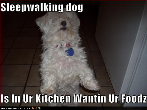 funny-dog-pictures-sleep-walking-dog