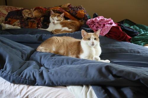 kitties in bed