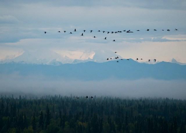 Deborah, Hess, and Flock of Cranes