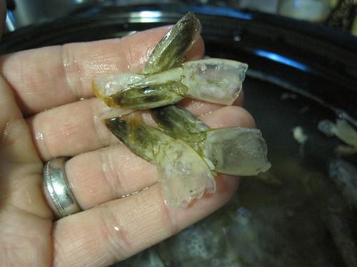 Shrimp shells for slow cooker seafood stock