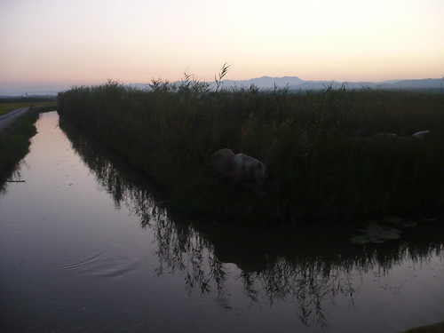 La bassa de les Olles