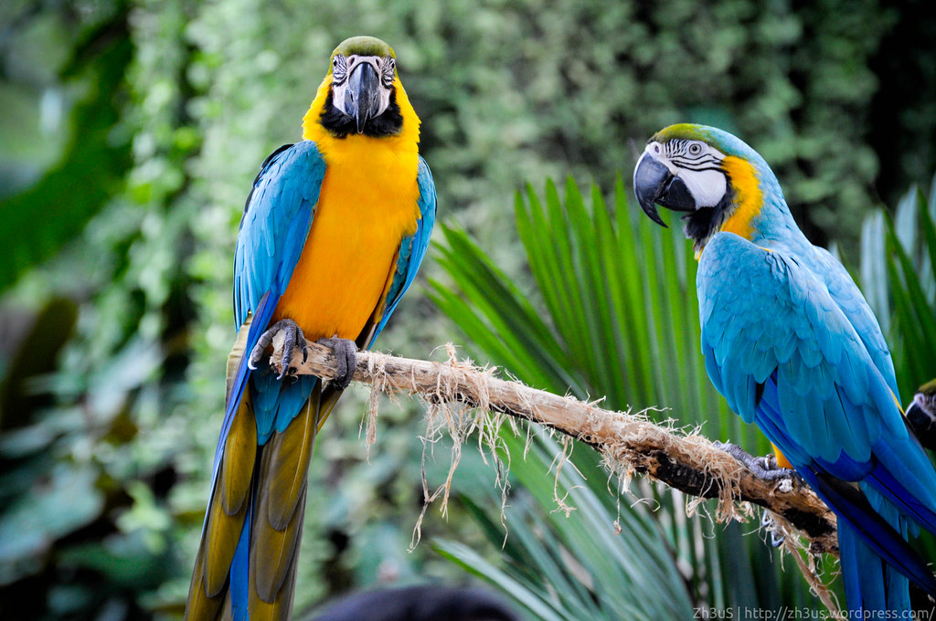 Jurong Birdpark (18 of 89)