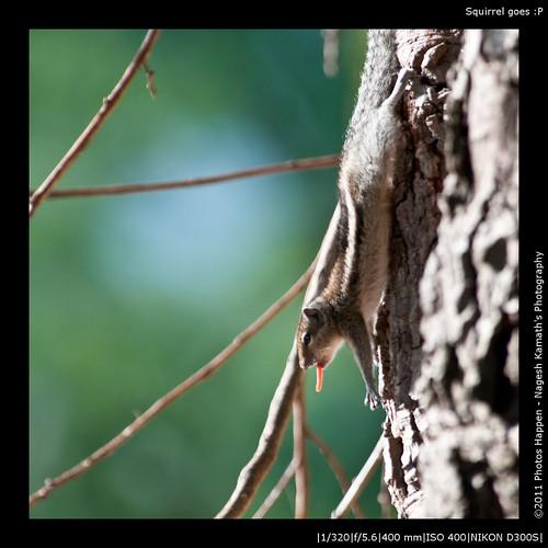 Squirrel goes :P